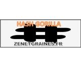 HASH - POLLEN Gorilla CBD