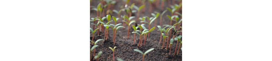 Germinance